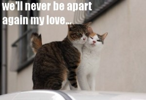 savoir si on est amoureuse
